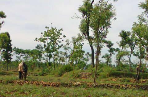 Suasana ladang saat musim hujan, hijau dimana-mana. Di gambar tersebut terdapat dua orang yang sedang sangat berbahagia karena hujan tiba dan mereka bisa bertani lagi. Sumber : Group Jagongan Lare Kapu Etan
