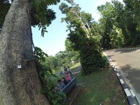 Jalan Kebun Raya Bogor