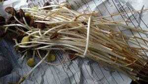 Sayur Ale Tuban
